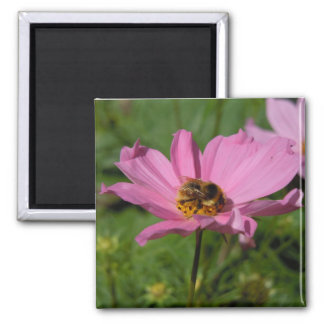 Cosmos - Busy Bee Magnet
