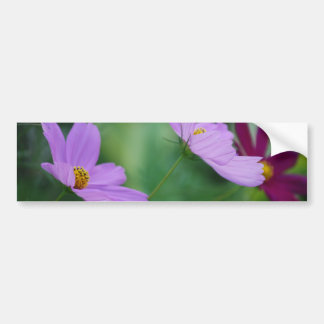 Cosmos flower and meaning bumper sticker