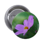 Cosmos flower and meaning buttons