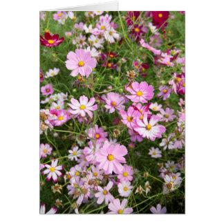 Cosmos Flower (Bidens Formosa). Kirkwood Card