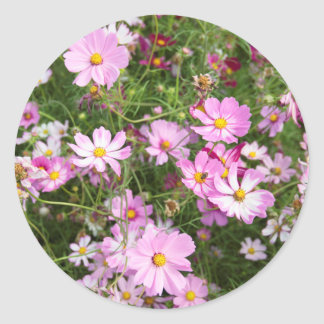 Cosmos Flower (Bidens Formosa). Kirkwood Classic Round Sticker