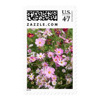 Cosmos Flower (Bidens Formosa). Kirkwood Postage