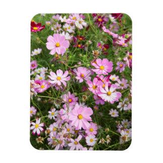 Cosmos Flower (Bidens Formosa). Kirkwood Rectangular Photo Magnet
