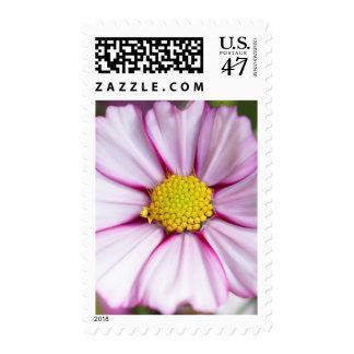 Cosmos Flower (bidens formosa) Postage