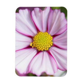 Cosmos Flower (bidens formosa) Rectangular Photo Magnet