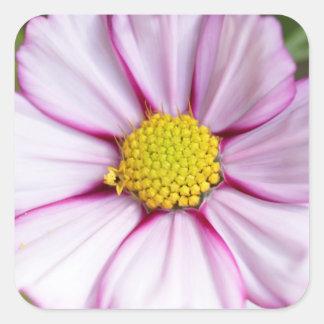 Cosmos Flower (bidens formosa) Square Sticker