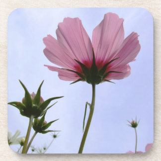 Cosmos Flower Coasters
