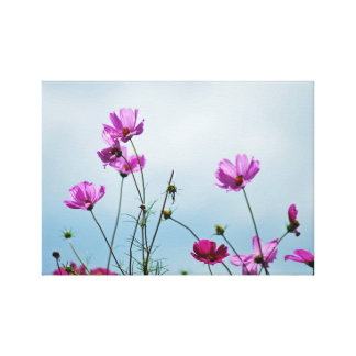 Cosmos flower for Mothers Day Stretched Canvas Prints