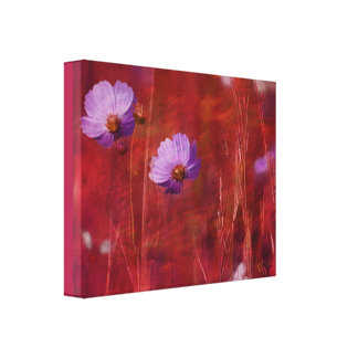 Cosmos Flower Print Canvas Print