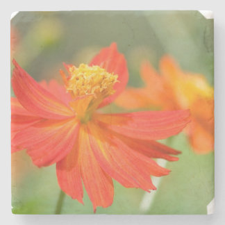 Cosmos Flowers Stone Beverage Coaster