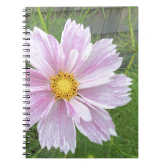Cosmos - Pale Pink & Green --- Notebook