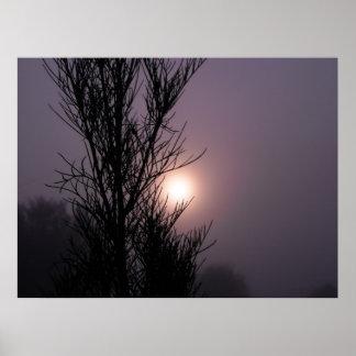 cosmos por la mañana impresiones