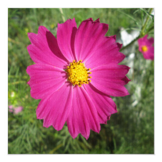 Cosmos Red Flower Card