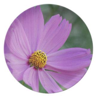 Cosmos rosado bonito y su significado platos de comidas
