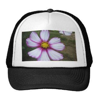 Cosmos Sensation Trucker Hat