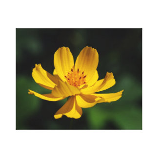 Cosmos Yellow - Jamiol's Art Cosmos Collection Canvas Print