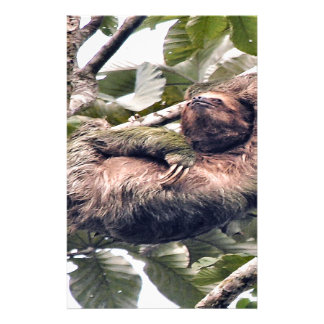 Cosra Rican sloth Stationery Paper