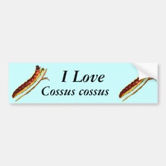 Cossus cossus caterpillar bumper sticker