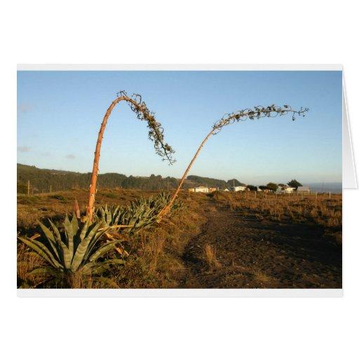 Costa americana de Chile de las plantas de siglo d Tarjeta