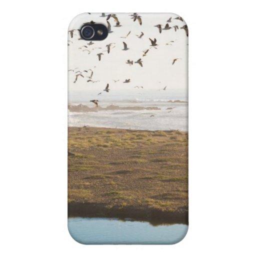 Costa californiana iPhone 4 carcasas