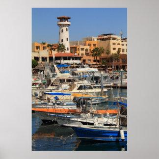 Costa del puerto en Cabo San Lucas Poster