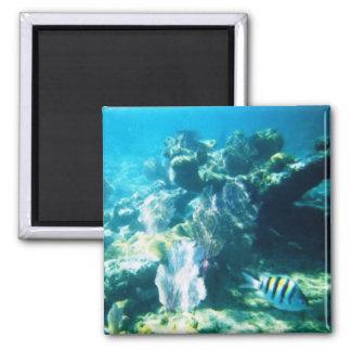 Costa Maya Reef Magnet