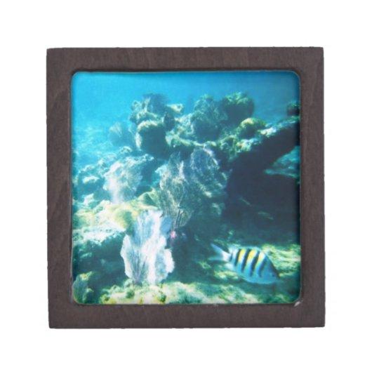 Costa Maya Reef Premium Gift Box