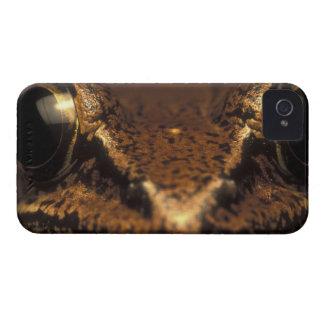 Costa Rica, Alajuela Province, Close-up of 2 iPhone 4 Case