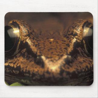 Costa Rica, Alajuela Province, Close-up of 2 Mouse Pad