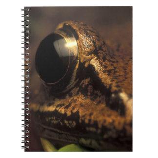 Costa Rica, Alajuela Province, Close-up of 2 Notebook