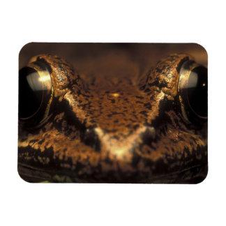 Costa Rica, Alajuela Province, Close-up of 2 Rectangular Photo Magnet