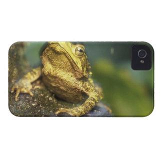 Costa Rica, Alajuela Province, Close-up of Green iPhone 4 Case-Mate Case