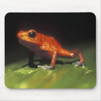 Costa Rica, Alajuela Province, Close-up of Mouse Pad