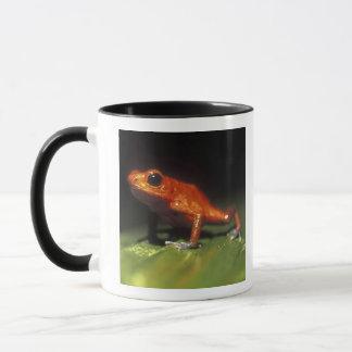 Costa Rica, Alajuela Province, Close-up of Mug