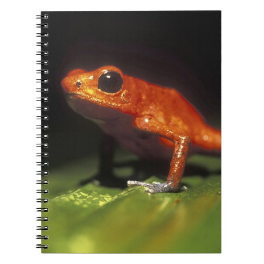 Costa Rica, Alajuela Province, Close-up of Notebook