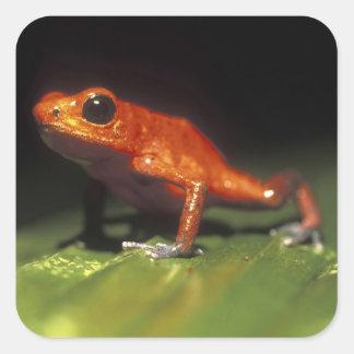 Costa Rica, Alajuela Province, Close-up of Square Sticker