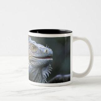 Costa Rica, Alajuela Province, Muelle San Two-Tone Coffee Mug