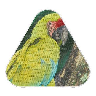 Costa Rica, Ara Ambigua, Great Green Macaw. Speaker