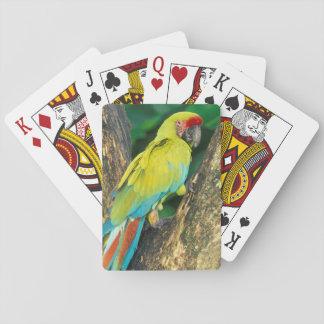 Costa Rica, Ara Ambigua, Great Green Macaw. Playing Cards