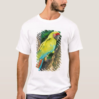 Costa Rica, Ara Ambigua, Great Green Macaw. T-Shirt