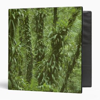 Costa Rica, Arenal National Park, rainforest Binder