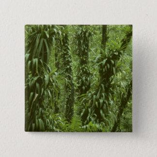 Costa Rica, Arenal National Park, rainforest Button