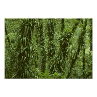 Costa Rica, Arenal National Park, rainforest Poster