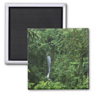 Costa Rica, Arenal Volcano area, Hanging Bridges 2 Inch Square Magnet