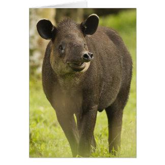 Costa Rica. Bairdii del Tapirus del Tapir de Baird Tarjeta De Felicitación