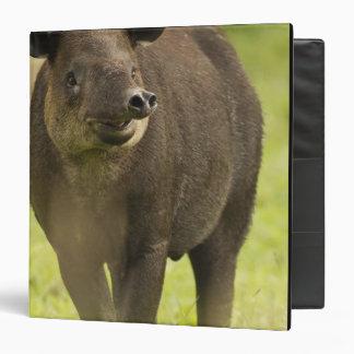 "Costa Rica. Bairdii del Tapirus del Tapir de Carpeta 1 1/2"""