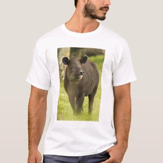 Costa Rica. Bairdii del Tapirus del Tapir de Playera