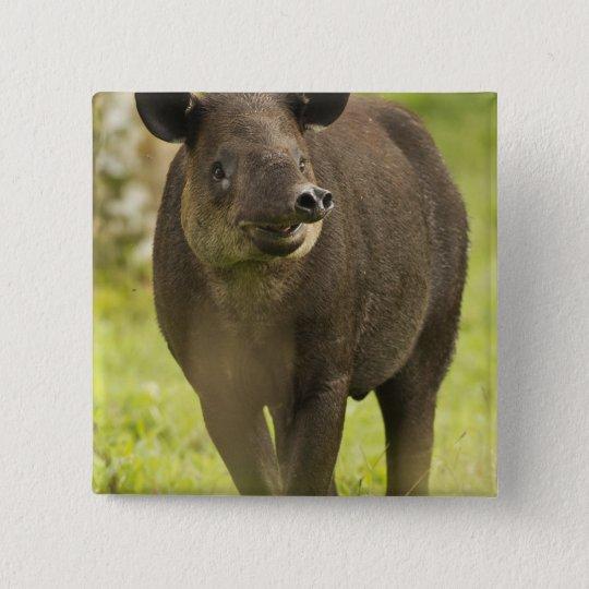Costa Rica. Bairdis Tapir Tapirus bairdii) Button