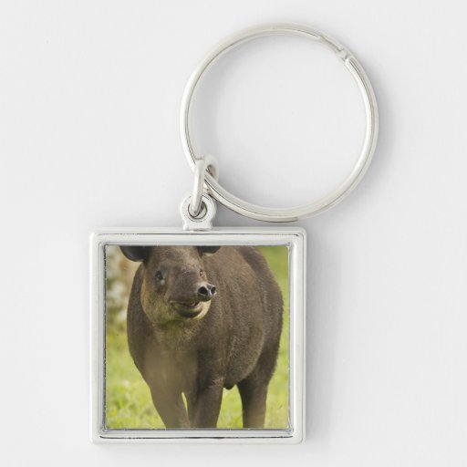 Costa Rica. Bairdis Tapir Tapirus bairdii) Silver-Colored Square Keychain