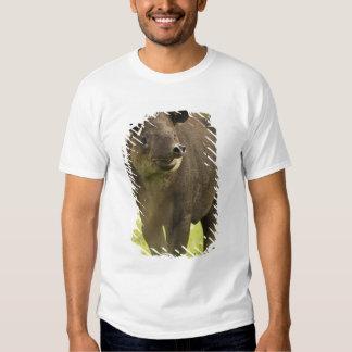 Costa Rica. Bairdis Tapir Tapirus bairdii) Tshirt